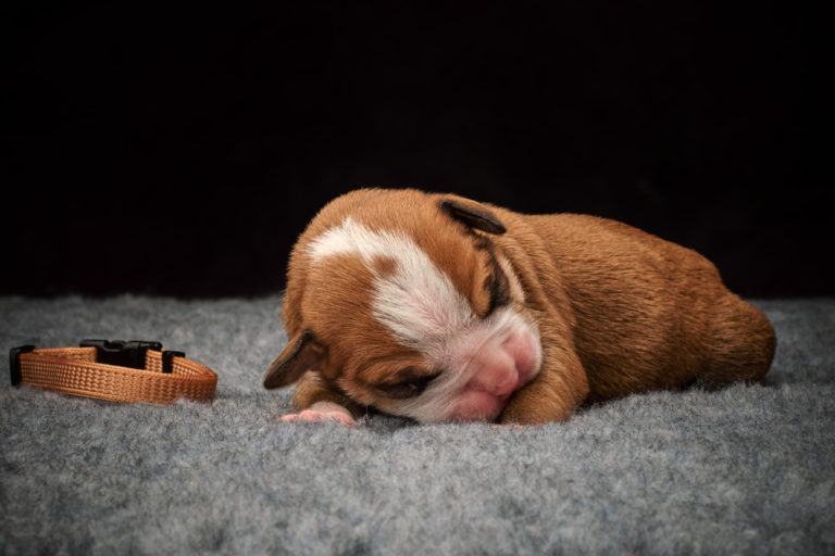 Puppies are 1 week old