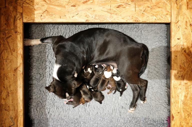 Matilda has puppies :-)