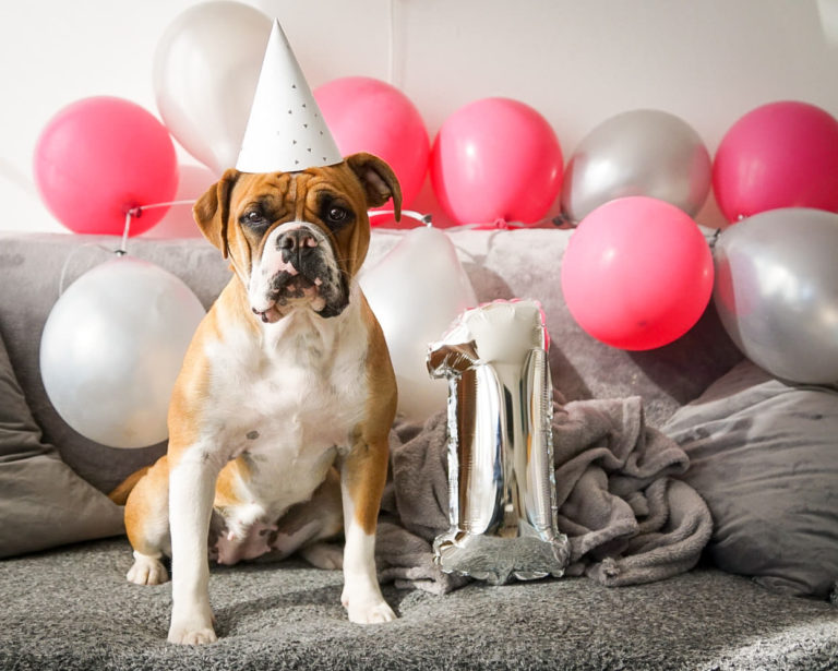 Puppies from litter A celebrate 1 year