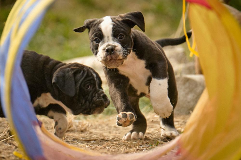 Puppies in the garden, 7 weeks