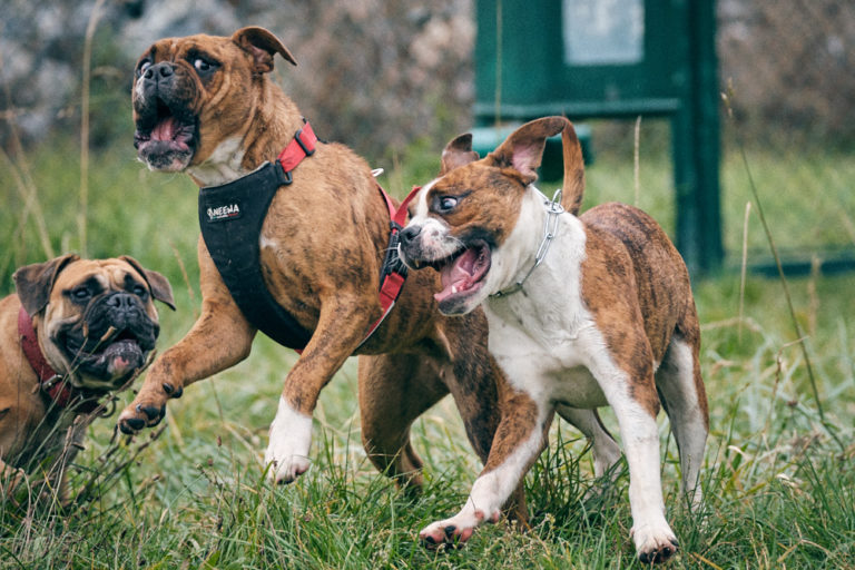 Read more about the article Socialization of puppies