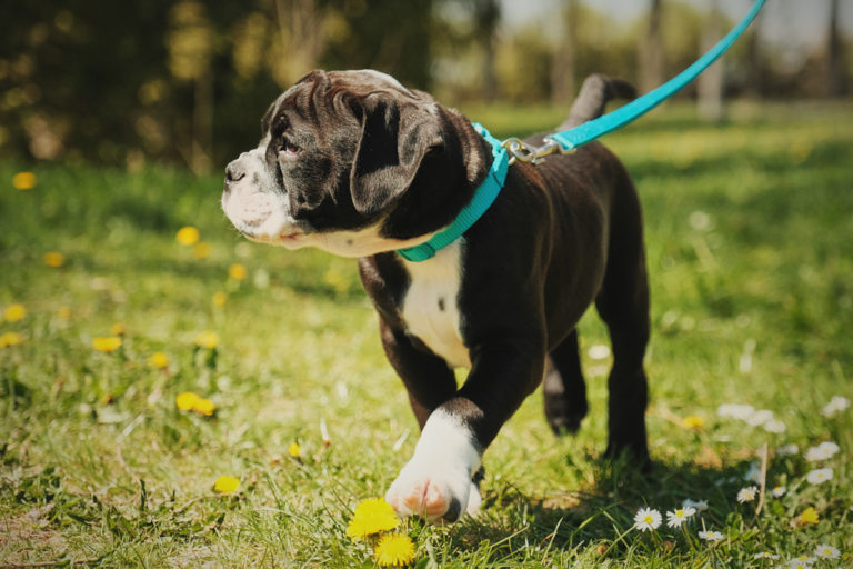 Puppy and physical activity